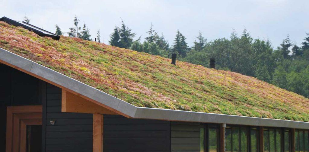 Poševna zelena streha